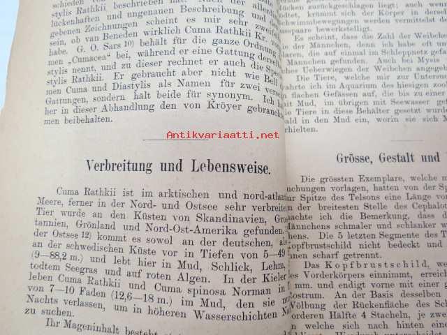 Beiträge zur Anatomie un Histologie von cuma Rathkii kr. - Inaugural ...